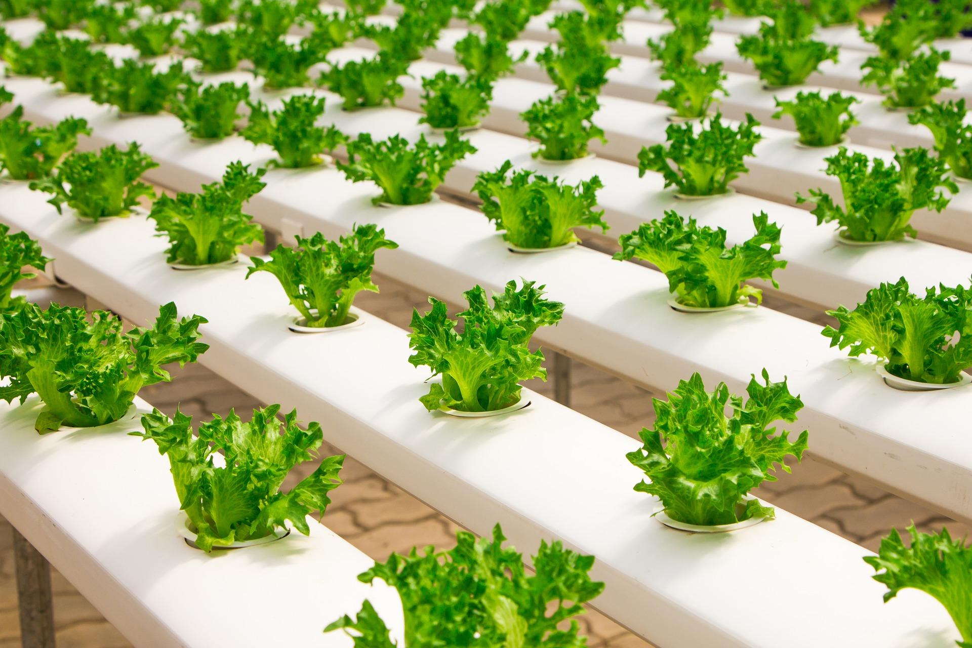 Cara Menanam Sayuran DI Lahan Sempit