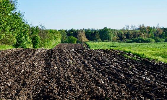 Tanaman Yang Dapat Menyuburkan Tanah