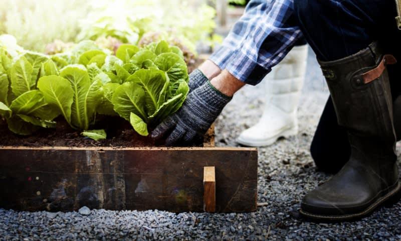 Usaha Bertanam dan Berjualan Sayuran