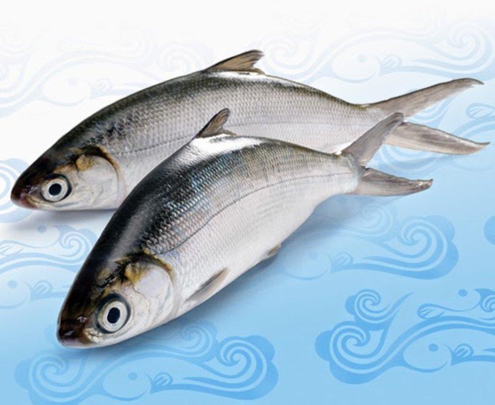 resep masak ikan bandeng kuah santan