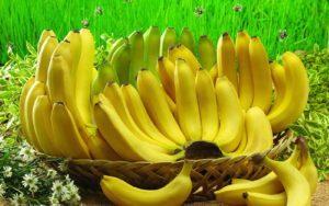 Cara menanam pisang