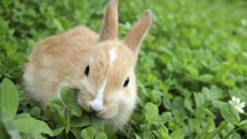makanan-kelinci